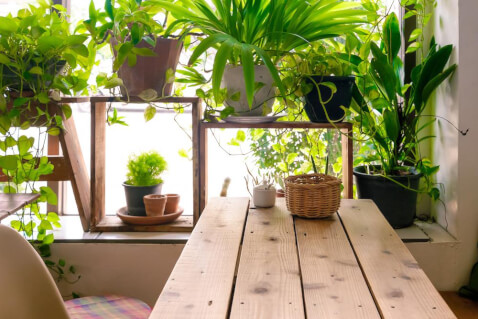 Why These 5 Houseplants Will Boost Your Health